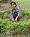 Naveed Akram